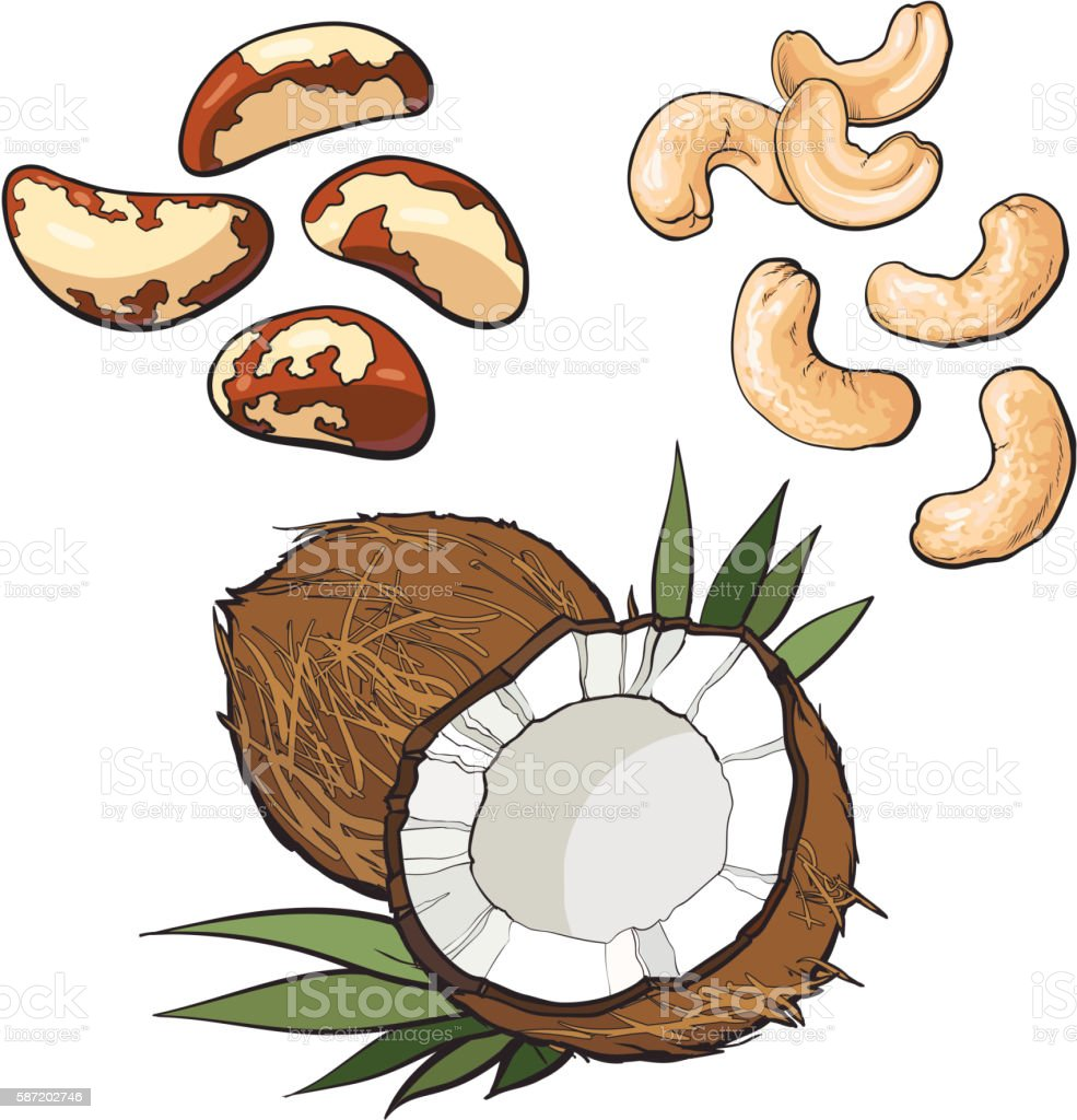 Collection of cashew, coconut and brazil nuts vector art illustration