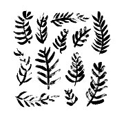 Collection of Christmas branches. Christmas trees. Hand drawn brush strokes nature element.