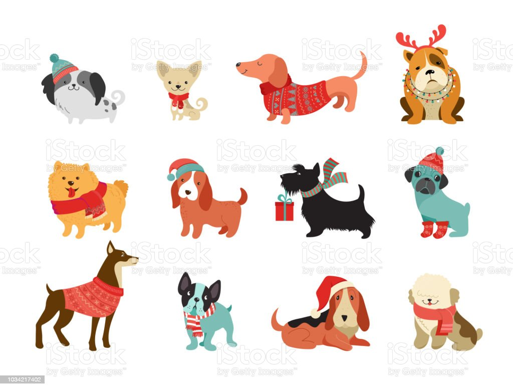 Collection of Christmas dogs, Merry Christmas illustrations of cute pets with accessories like a knited hats, sweaters, scarfs - illustrazione arte vettoriale