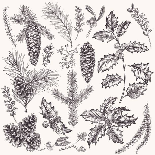 Collection of Christmas plant. vector art illustration