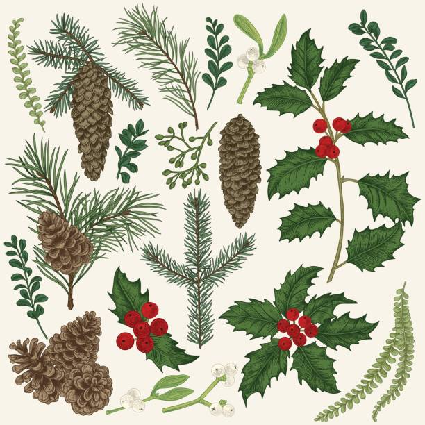 collection of christmas plant. - gałązka stock illustrations