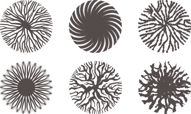 collection of circular organic natural branch arrangements vector illustration of a collection of circular organic natural branch arrangements root hair stock illustrations