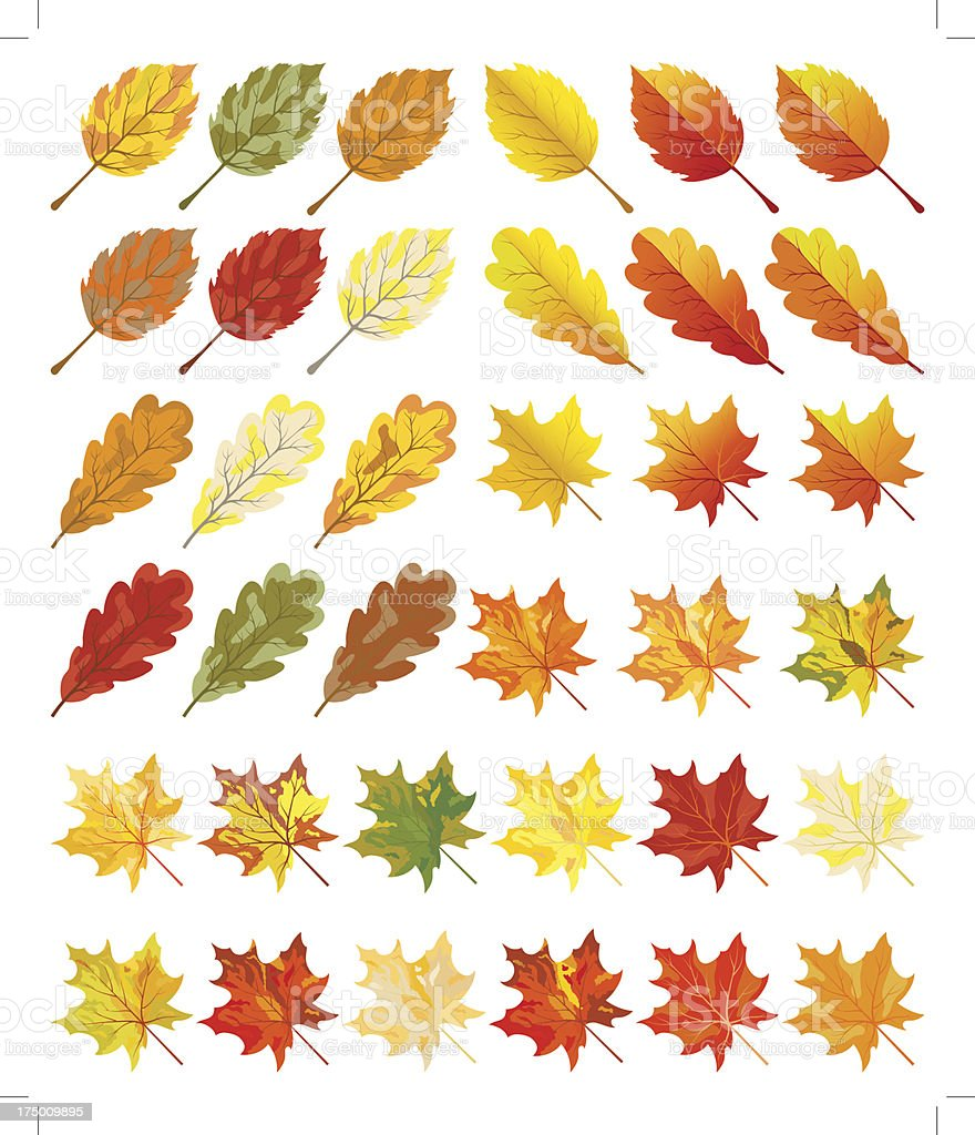Collection of color autumn leaves royalty-free stock vector art