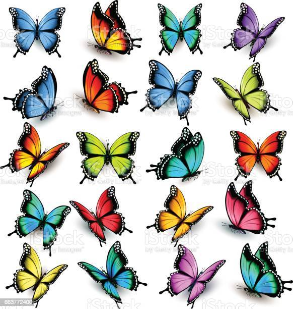 Collection of colorful butterflies flying in different directions vector id663772400?b=1&k=6&m=663772400&s=612x612&h=lfn1yjkfklwlnlhx0iccuim6kivpzybdv7sy6iggogs=