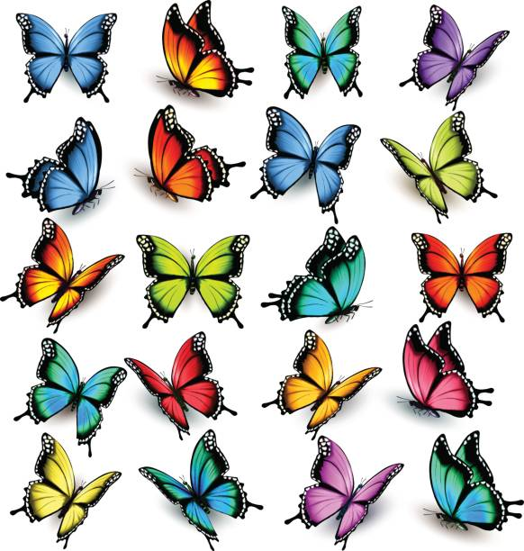 collection of colorful butterflies, flying in different directions. - butterfly stock illustrations