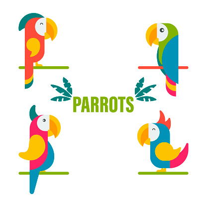 Collection of Cute Colorful Tropical Parrots Vector Illustration
