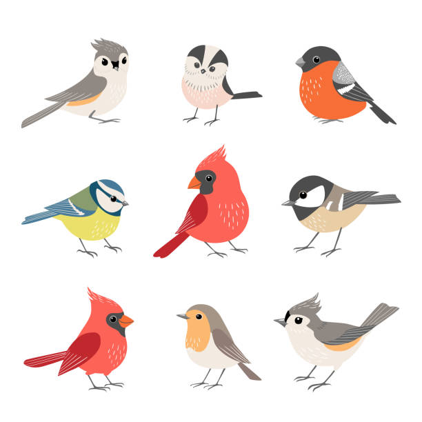 Collection of cute winter birds Set of cute winter birds isolated on white background chickadee stock illustrations