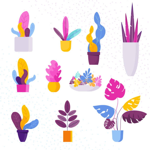 Collection of decorative Exotic tropical houseplants in a flower pot vector art illustration