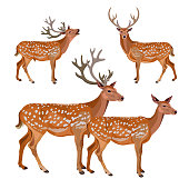 Collection of deer