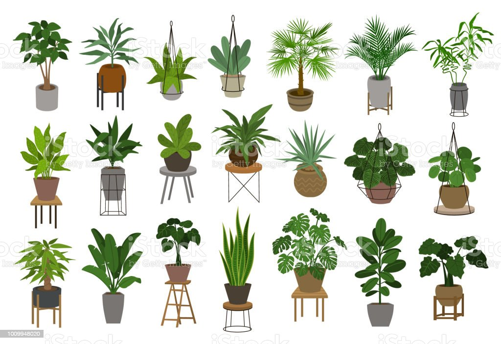 collection of different decor house indoor garden plants in pots and stands graphic set