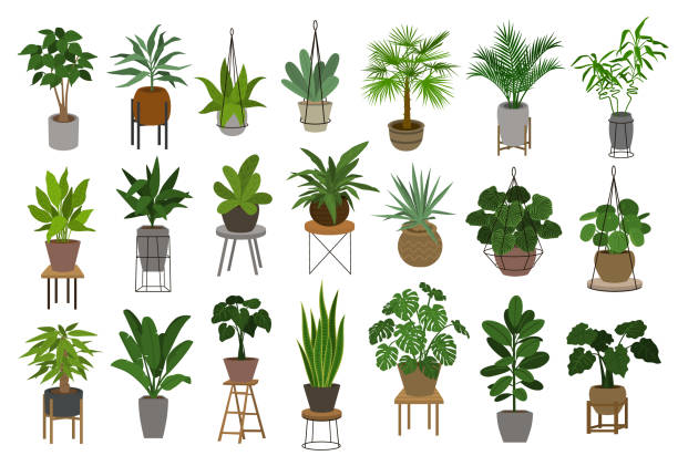 collection of different decor house indoor garden plants in pots and stands graphic set collection of different decor house indoor garden plants in pots and stands graphic set bird of paradise plant stock illustrations
