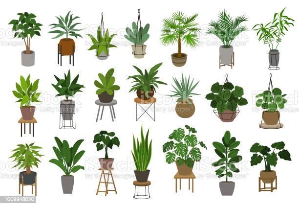 Verzameling Van Verschillende Decor Huis Binnen Tuin Planten In Potten En Staat Afbeeldingenset Stockvectorkunst en meer beelden van Abstract