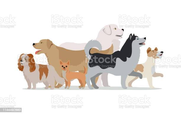 Collection of different dogs isolated on white vector id1144492883?b=1&k=6&m=1144492883&s=612x612&h=gl9vtobwgics yvt2var6gdtamisgeg05tuoos90je0=