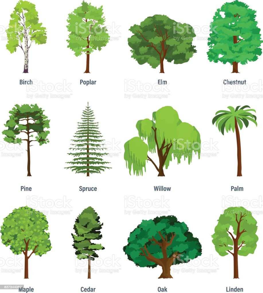 Collection of different kinds of trees stock illustration - A gardener is planting two types of trees ...