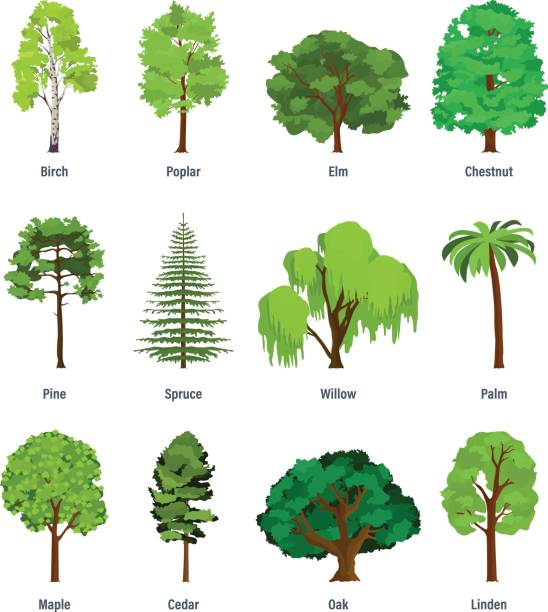 collection of different kinds of trees - trees stock illustrations