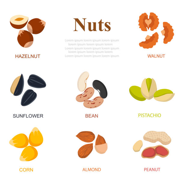 ilustrações de stock, clip art, desenhos animados e ícones de collection of different nuts vector flat style. different nuts, walnuts, cashews, almonds on isolated background - amendoas