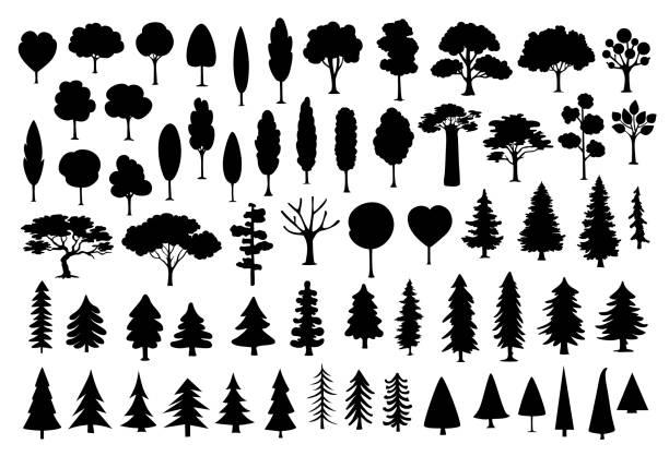 bildbanksillustrationer, clip art samt tecknat material och ikoner med samling av olika park, skog, barrträd tecknade träd siluetter i svart färg som - forest
