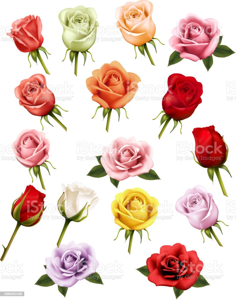 Collection of different roses. Vector. royalty-free collection of different roses vector stock vector art & more images of abstract