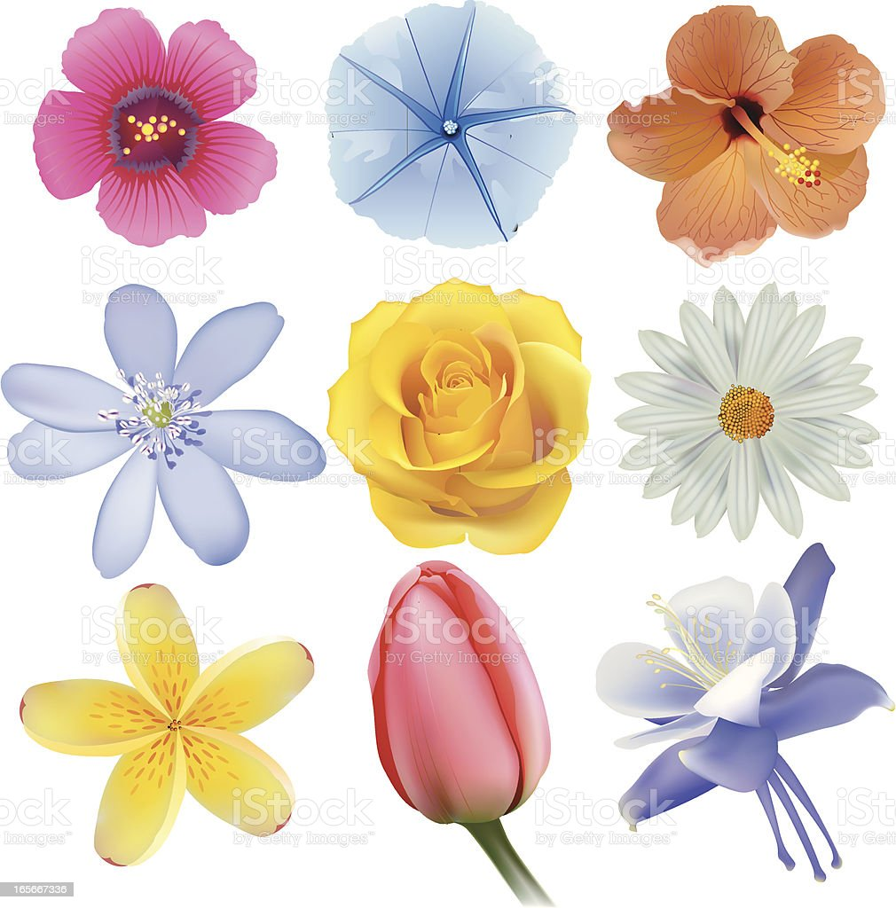 Collection of different types of flowers stock vector art more collection of different types of flowers royalty free collection of different types of flowers stock izmirmasajfo Image collections