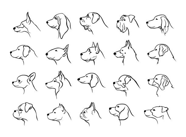 collection of dogs heads profile side view portraits silhouettes in black color vector art illustration