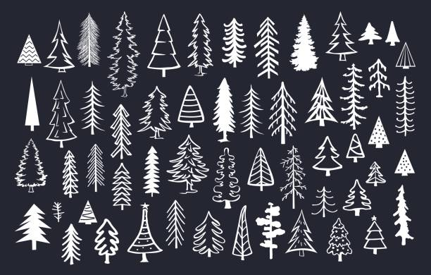 collection of doodle pine fir conifer trees in white color over black background vector art illustration