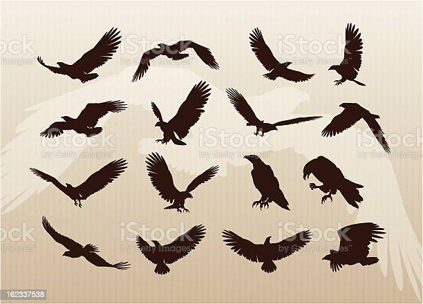 Collection of eagles vector id162337538?b=1&k=6&m=162337538&s=612x612&h=gpmvh190lini8pihatsnvmxaloiqb be8dqlcw2jxzm=