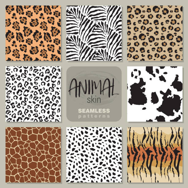 stockillustraties, clipart, cartoons en iconen met collectie van acht vector naadloze patronen met huid van een proefdier zebra, de luipaard, de jaguar, giraffe koe. - safari