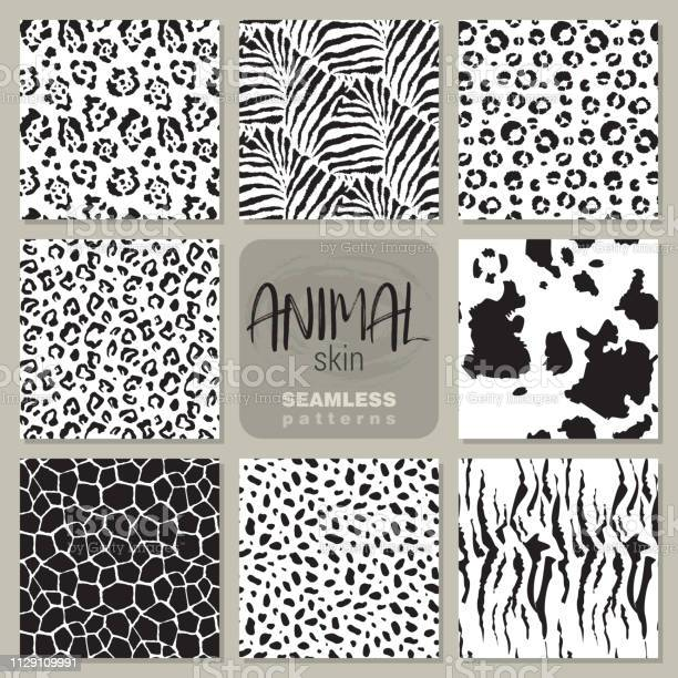 Collection of eight vector seamless patterns with animal skin zebra vector id1129109991?b=1&k=6&m=1129109991&s=612x612&h=b8ur9ong0xn1yaakpnais fhmk18rvlnesocnm5iu28=