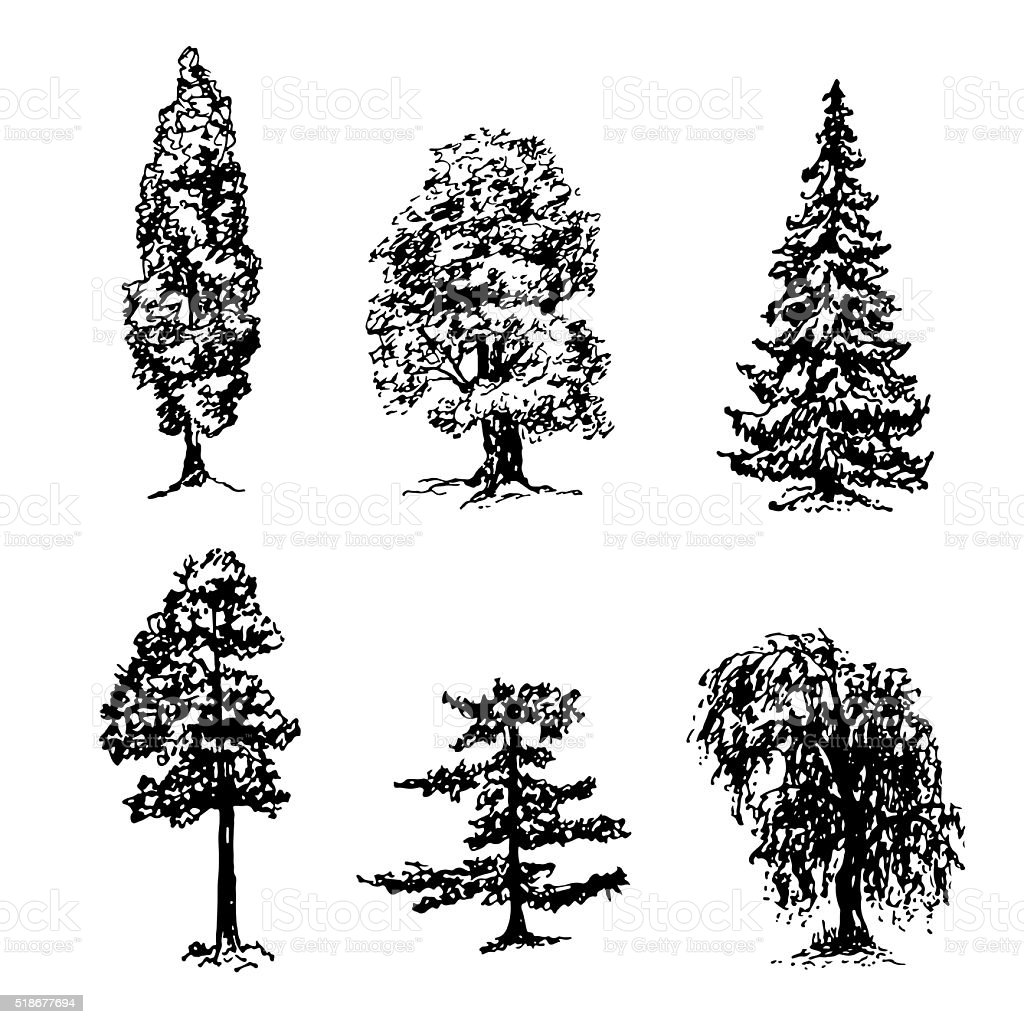 collection of elements of different types of trees sketch vector illustration vector art illustration