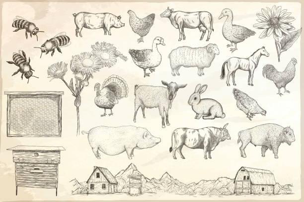 stockillustraties, clipart, cartoons en iconen met inzameling van landbouwhuisdieren op een documentachtergrond - pig farm