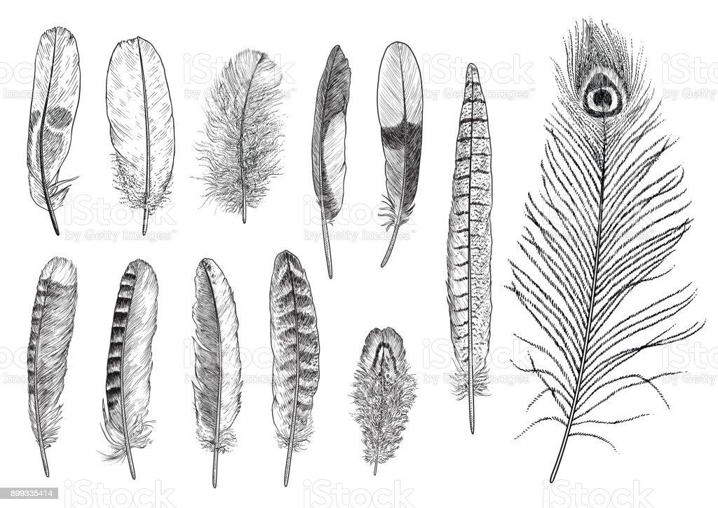 Line Drawing Feather : 깃털 일러스트 레이 션 드로잉 판화 잉크 라인 아트 벡터 컬렉션 검정에 대한 스톡 및 기타