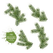 Collection of Fir Branches. Vector Symbol Christmas and New Year