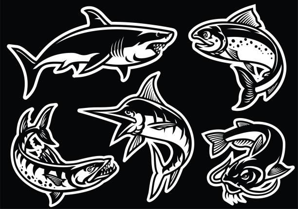 sammlung von fischen in schwarz / weiß - haifischköder stock-grafiken, -clipart, -cartoons und -symbole