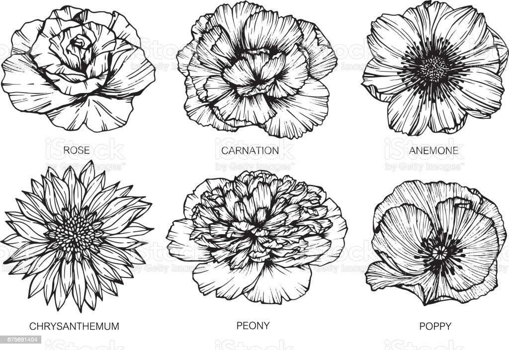 Line Art Flower Tattoo : Collection of flowers drawing and sketch with lineart on