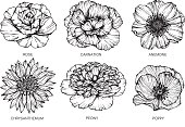 Collection of flowers drawing and sketch with line-art on white backgrounds.