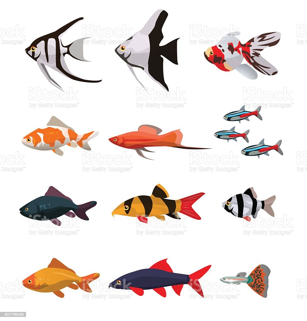 Collection of freshwater fishes vector art illustration