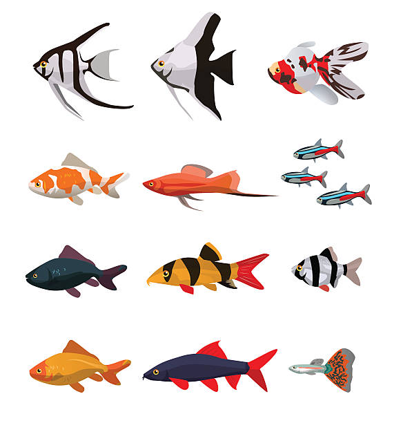 Collection of freshwater fishes Collection of freshwater fishes vector illustration in flat style freshwater fish stock illustrations