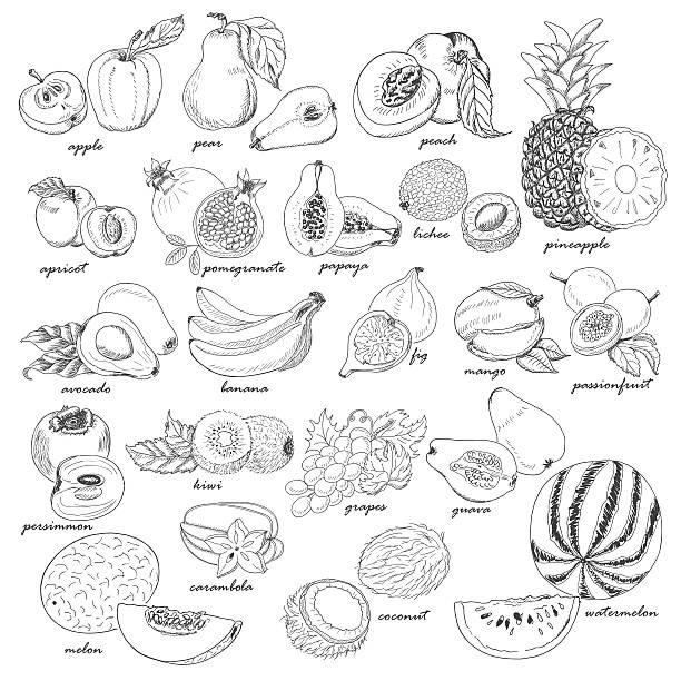 illustrations, cliparts, dessins animés et icônes de collection de croquis de fruits frais. - fruit de la passion