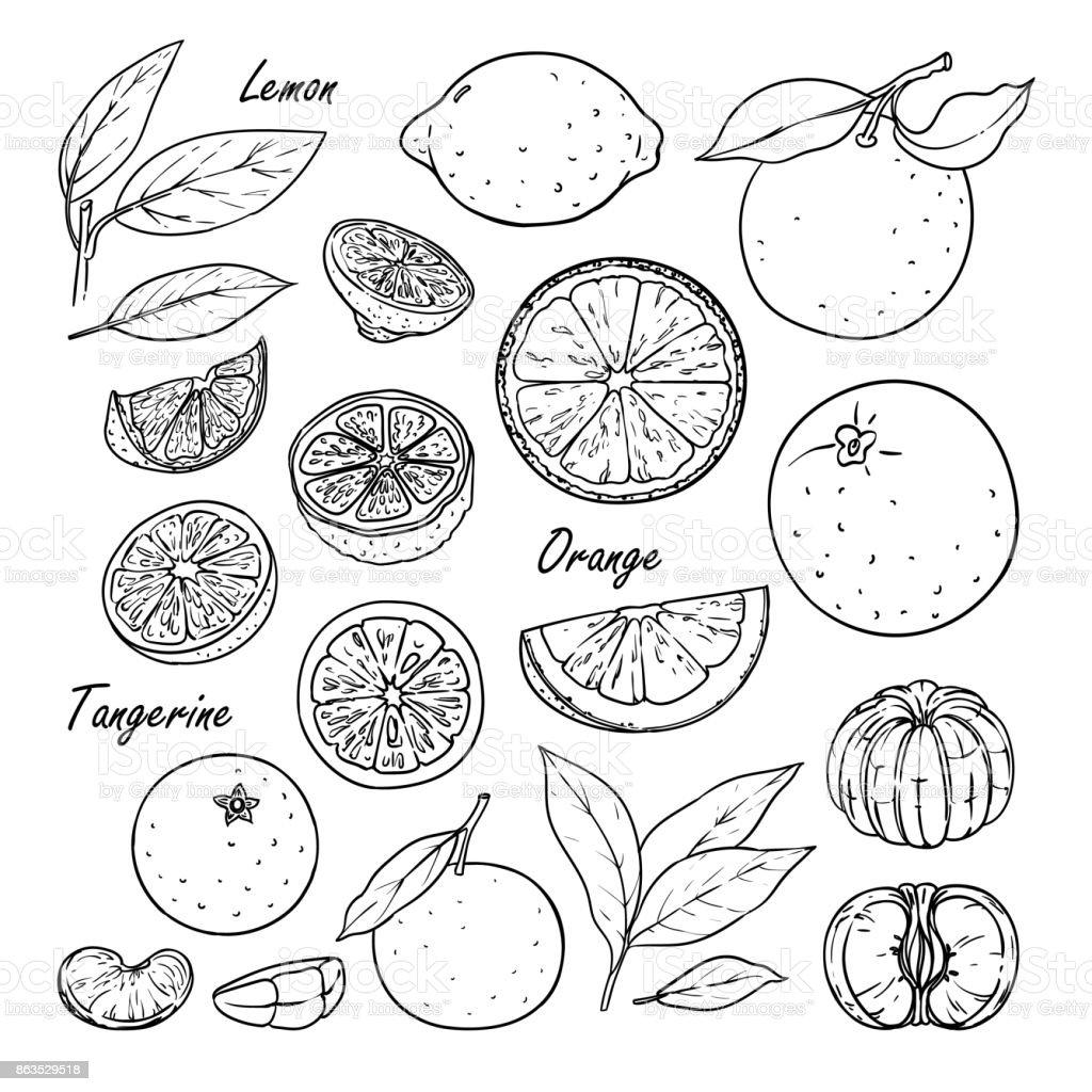 Collection of fruit: lemon, orange, tangerine isolated on white