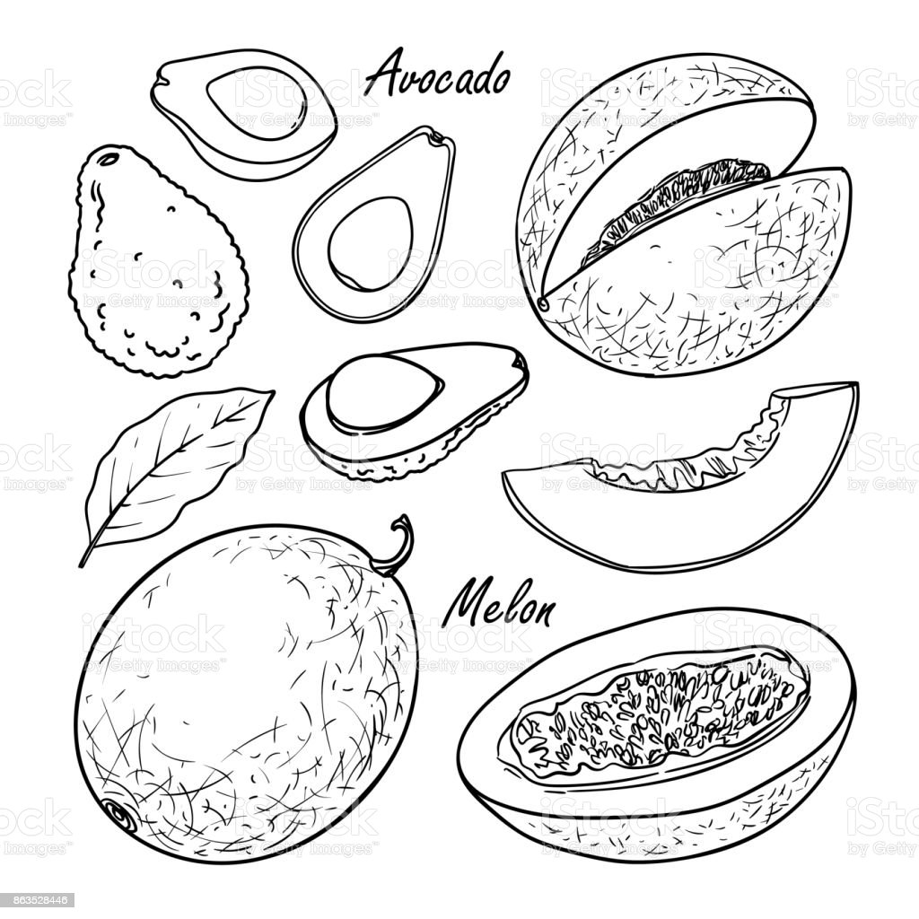 Collection of fruit: peach, plum, apricot isolated on white vector art illustration