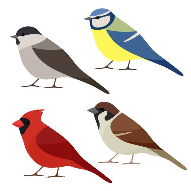 Collection of garden bird. Sparrow, Northern cardinal, Blue tit, Marsh tit isolated on white background. Colorful bird set in flat style vector art illustration