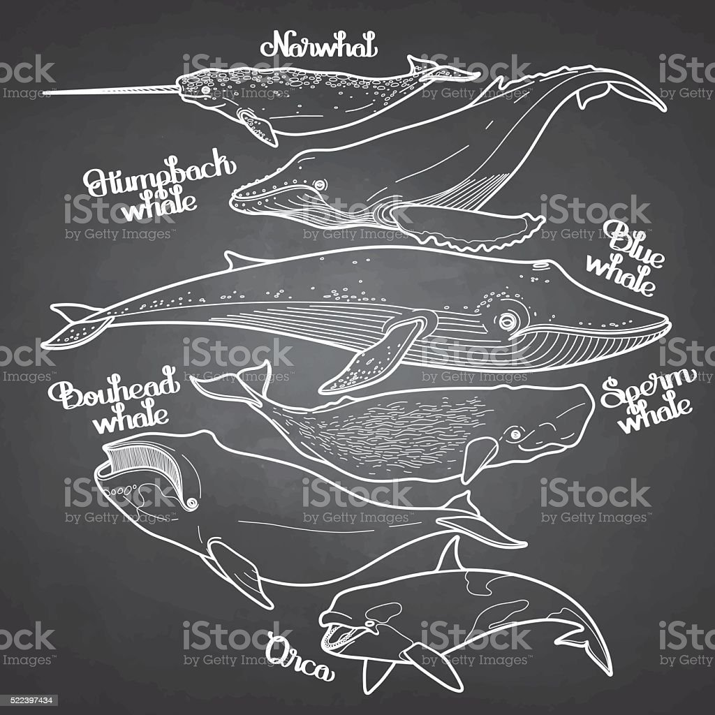 Collection of graphic whales vector art illustration