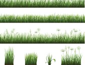 Vector illustration of a collection of grass