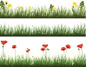 Vector illustration of a collection of grass with dandelions and poppies