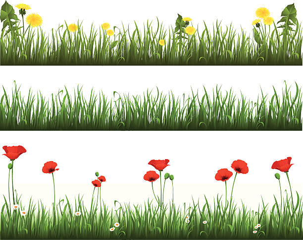 Collection of grass with dandelions and poppies vector art illustration