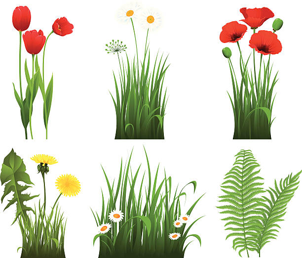 Collection of grass with flower vector art illustration