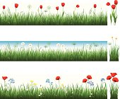 Vector illustration of a collection of grass with tulips, camomiles and poppies