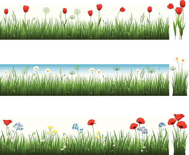 Collection of grass with tulips, camomiles and poppies vector art illustration