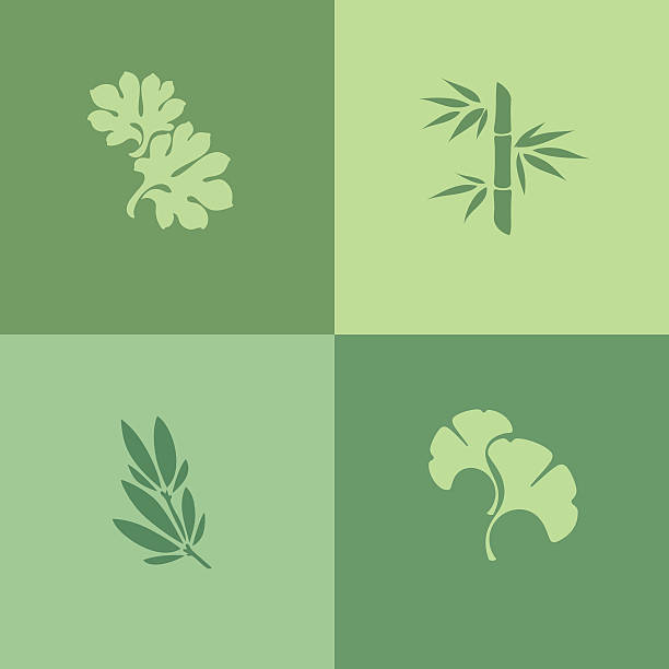 Collection of green leaf silhouettes on green background Leaf. Set of design elements ginkgo stock illustrations