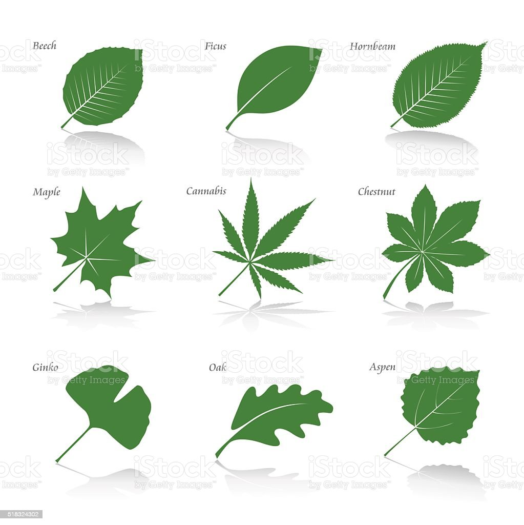 Collection of Green Leafs. Vector Illustration. vector art illustration